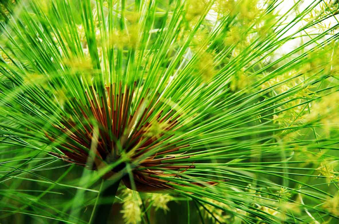 Jardin Botanique Deshaies Guadeloupe Location Guadeloupe Bungalow Gite Deshaies