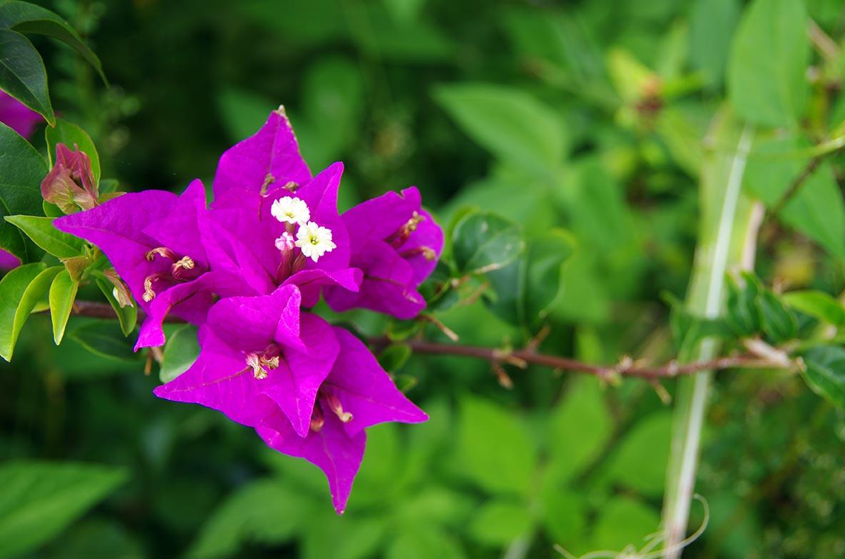 Fleurs location bungalow for Les noms des fleurs