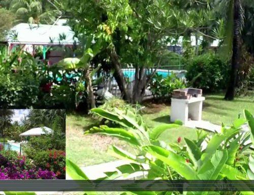 Location Guadeloupe, Fleurs des îles, petite visite vidéo de nos locations de vacances à Deshaies
